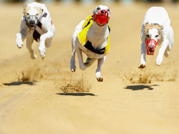 Dogs compete during an annual international dog race in Gelsenkirchen, Germany, June 9, 2019. REUTERS/Thilo Schmuelgen - RC15ED033590