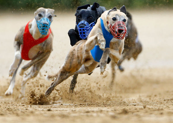 Dogs compete during an annual international dog race in Gelsenkirchen, Germany, June 9, 2019. REUTERS/Thilo Schmuelgen - RC1638E3D800
