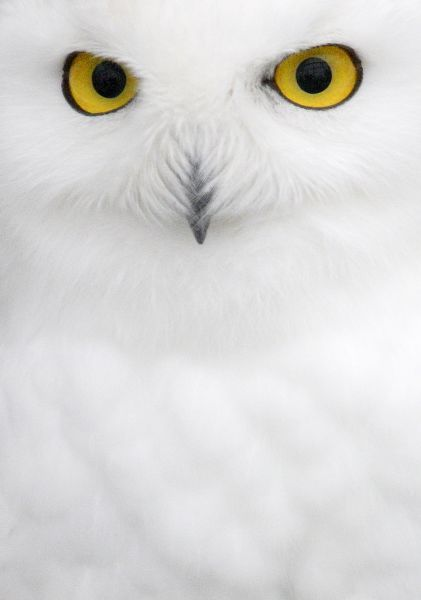 Gm1Dwnqluvaa. A Polar Owl sits in an open-air cage at the 'Royev Ruchey'