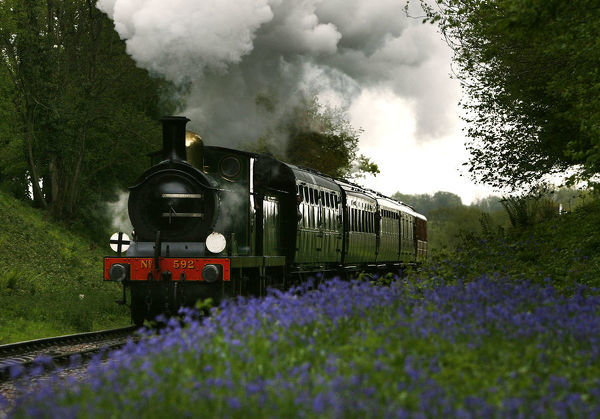A steam engine runs through a cutting of bluebells between Sheffield Park and Horsted